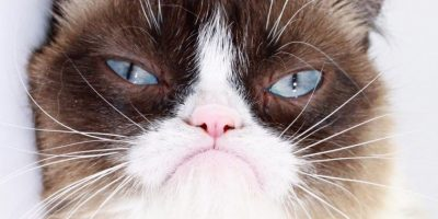 Optimize your videos for advertising with grumpy cat